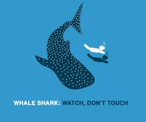 Whale Shark: watch, don't touch
